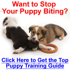 How to Stop Puppies Biting